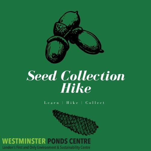 Dark Green background with black acorns and a pinecone. Westminster Ponds Centre Logo in bottom left corner